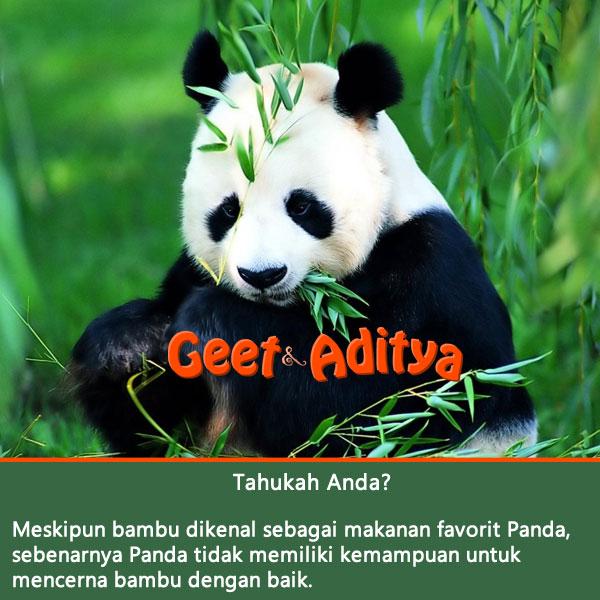 panda,bambu