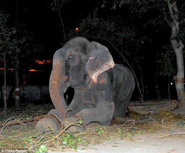 gajah,raju,india,wildlife SOS