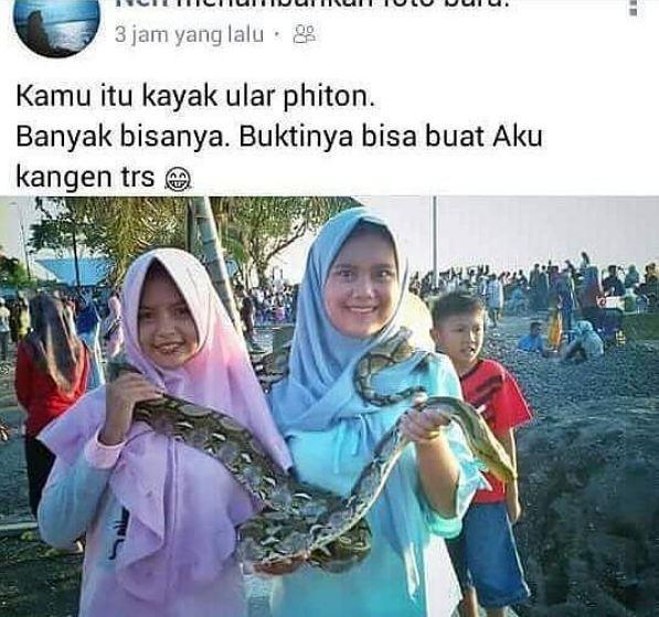 1. Yakin ular piton, dek? Emang sejak kapan ular piton berbisa?