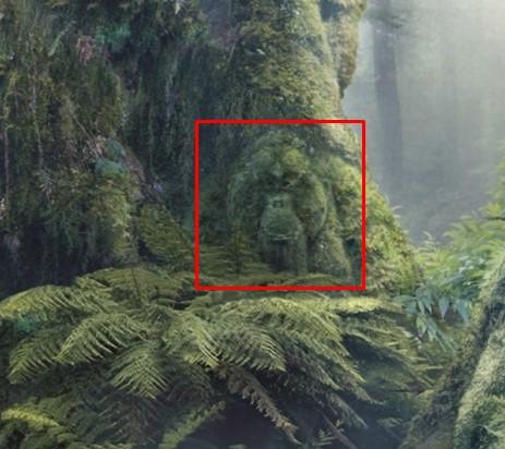 3. Orangutan