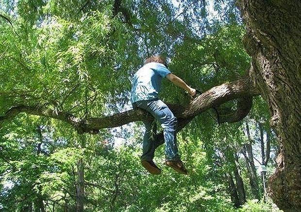 Bekerja sebagai penebang pohon