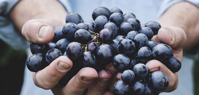 Karena kandungan gulanya, buah anggur tidak dianjurkan untuk sering dikonsumsi saat diet